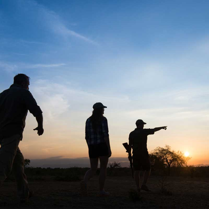 Group Safari Experiences