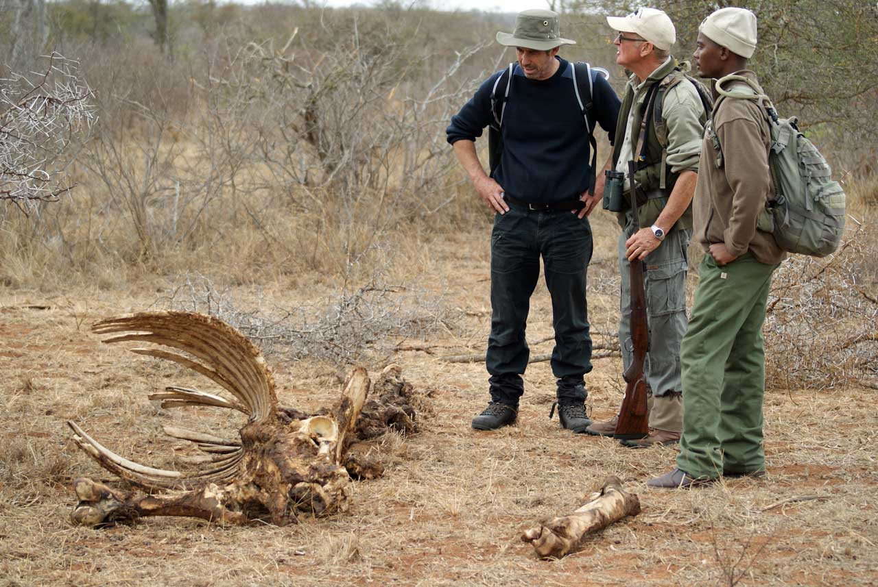 Studying the remains of a carcass