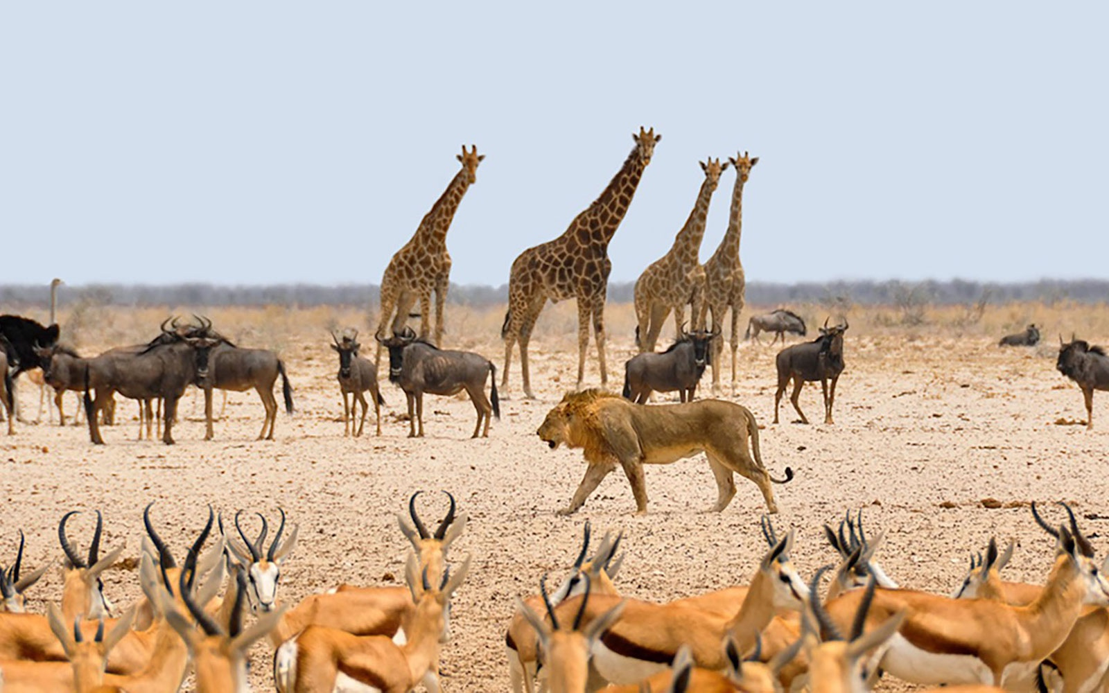 Namibia, Desert and Wildlife